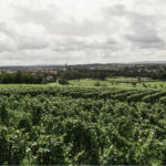 Vineyard and village in the background: french wine regions