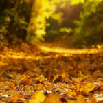 leaves covering a forest path with beautiful golden light
