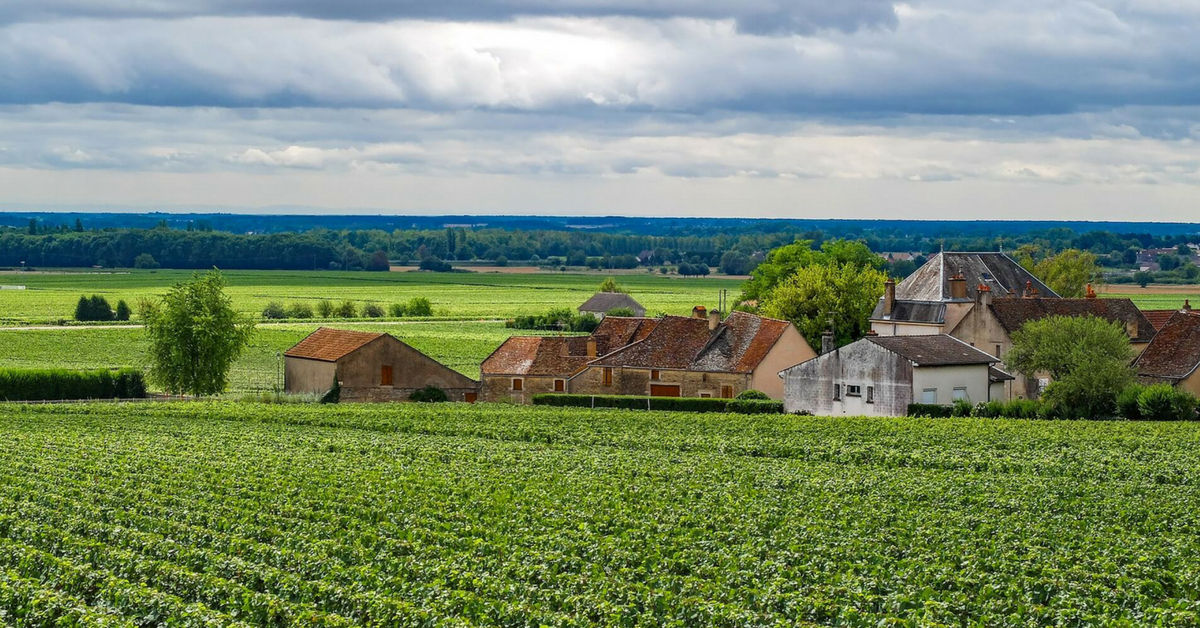 Burgundy countryside with vineyard: burgundy wines episode