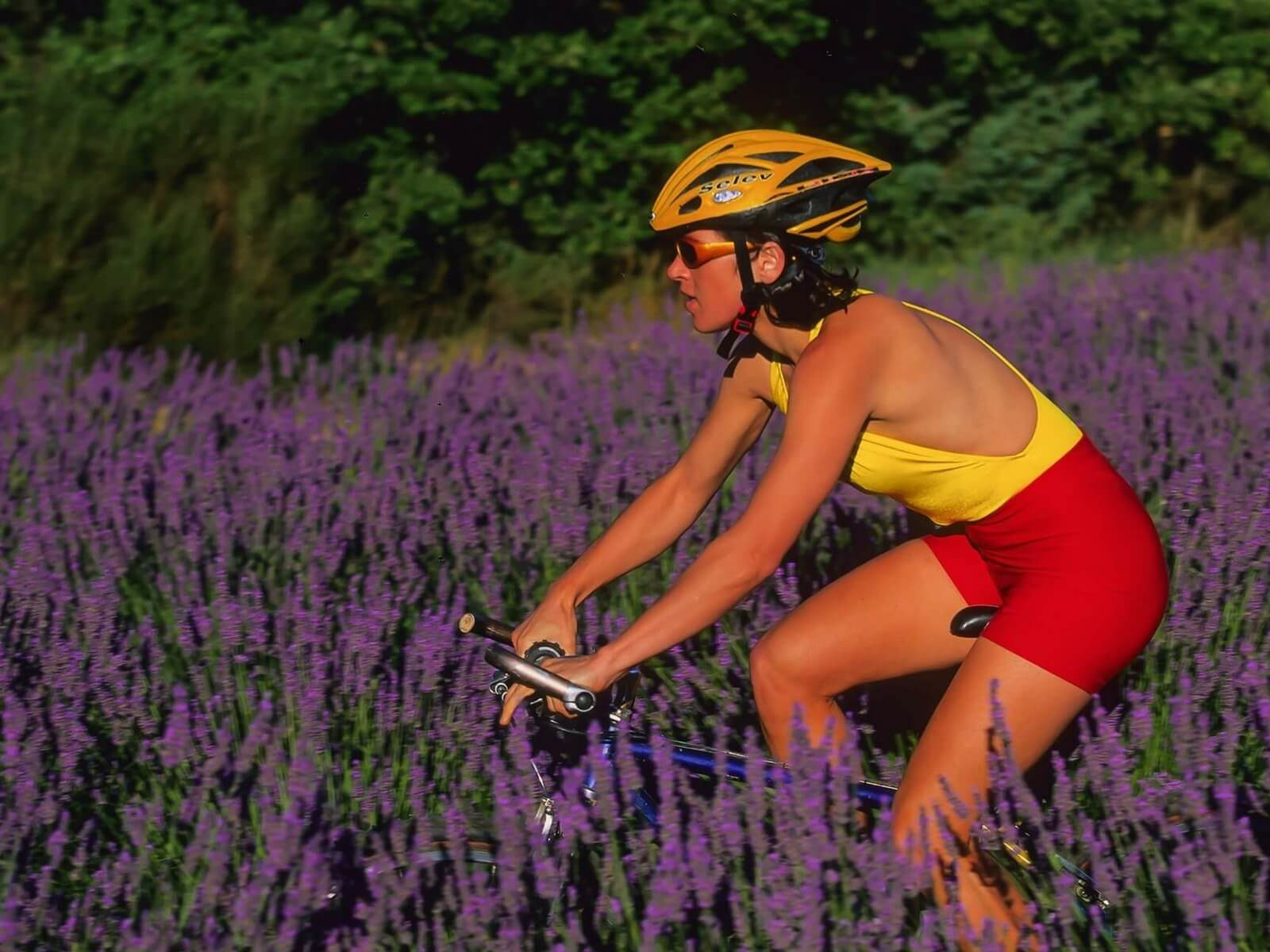 woman riding in the french countryside among lavender fields