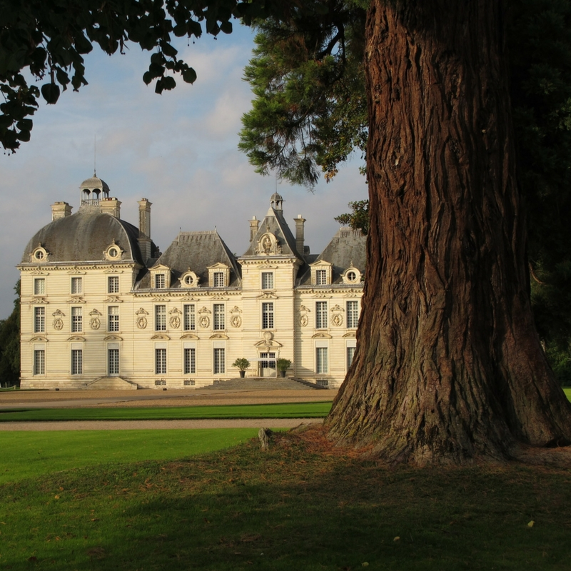 large old tree in the foreground and Cheverny chateau in the background