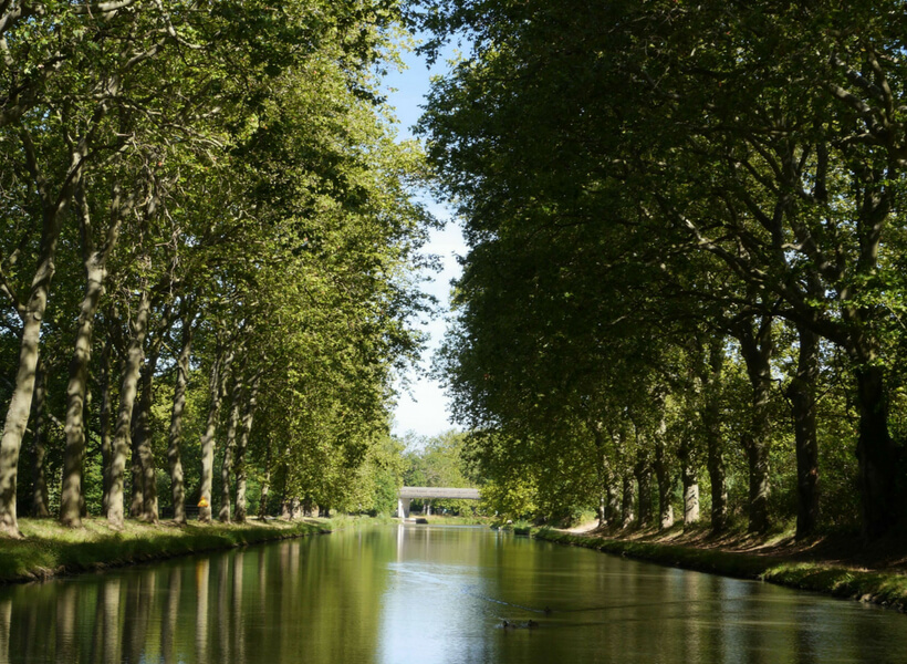 the bucolic canal du midi with its tree-lined banks