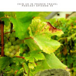 green grapes on a vine: French Alps and Provence Tours episode