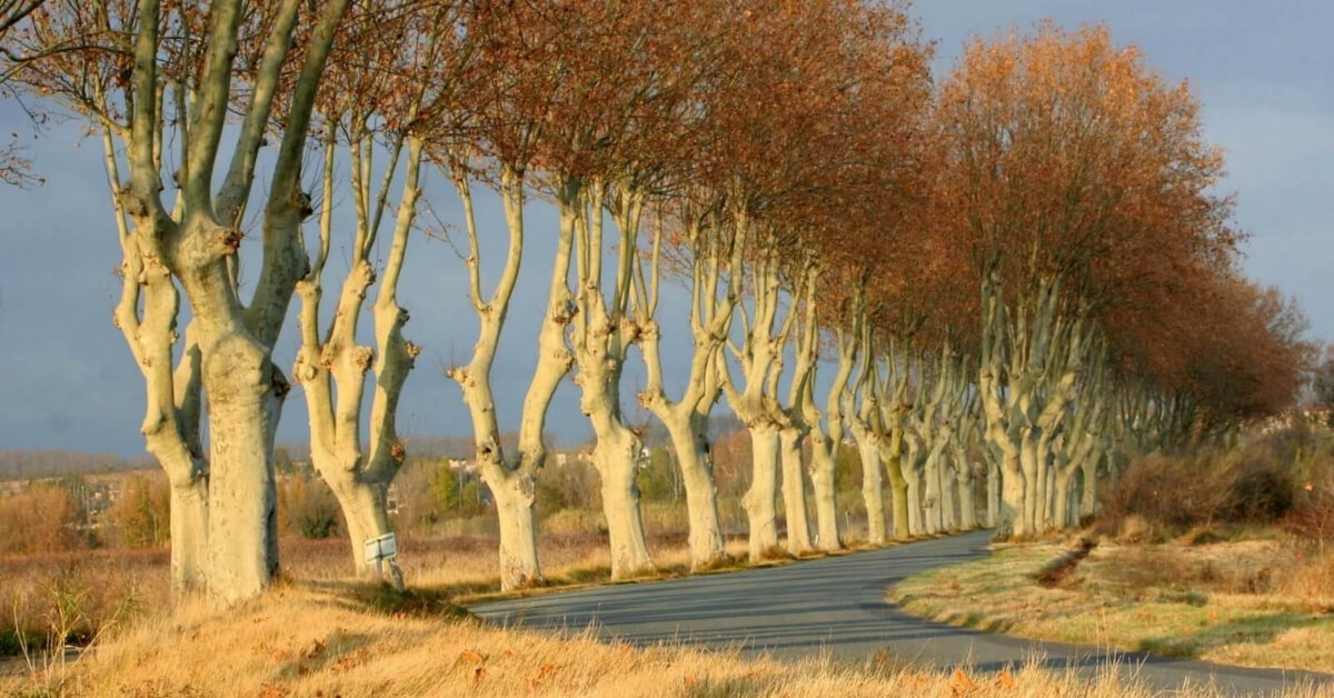 Tree-lined road in France