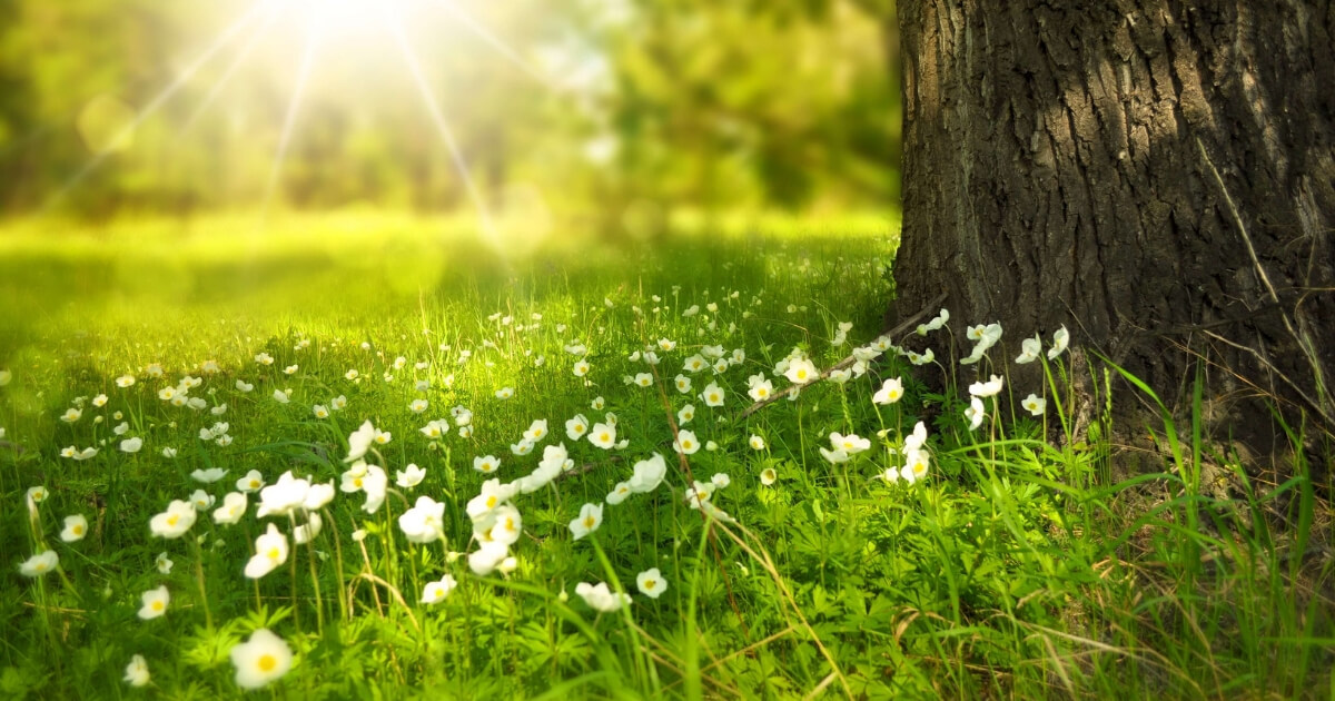 Spring meadow with little white flowers and sun rays: public holidays in france episode