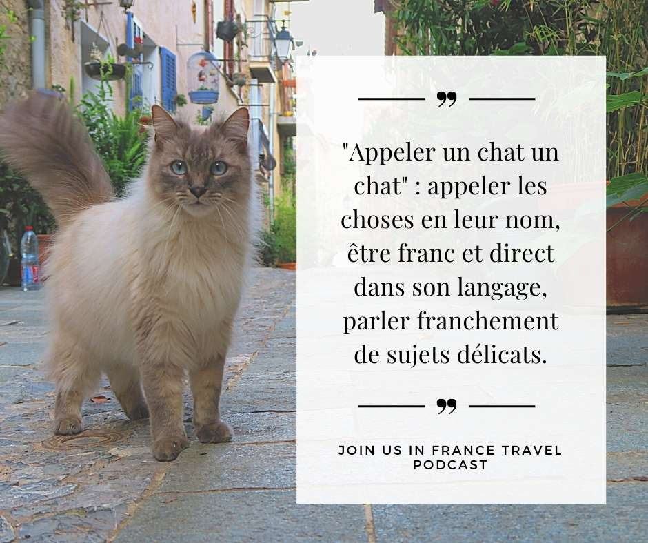 French Tip of the Week: Il faut appeler un chat un chat