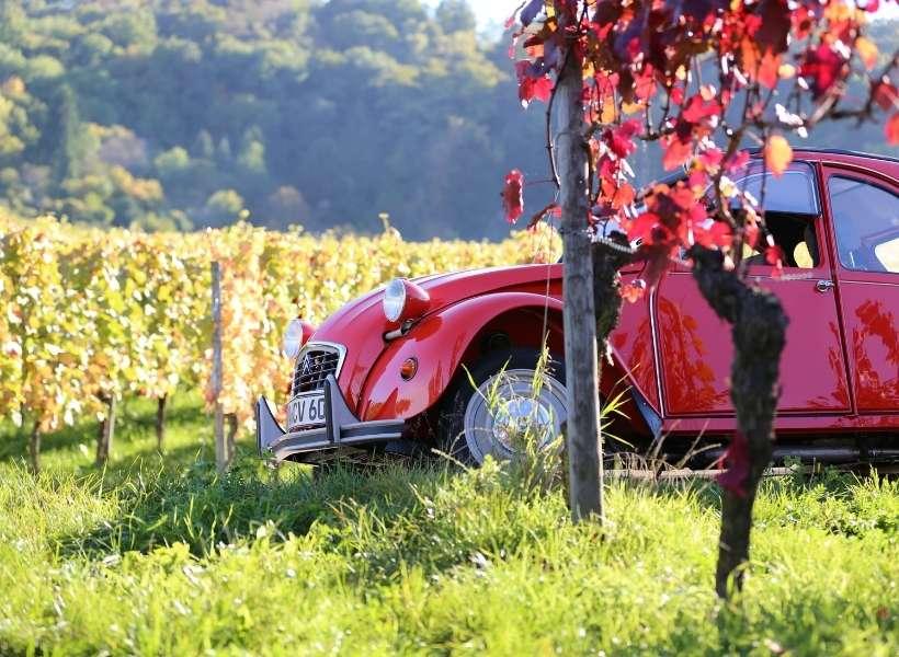 2CV car in a vineyard: are you a proper francophile episode